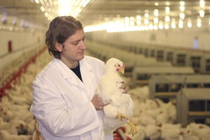 Vet working on chicken farm