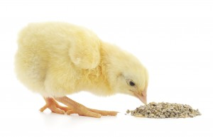 poultry feed with enzymes